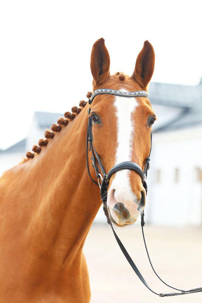 Hästen D'Avicii.