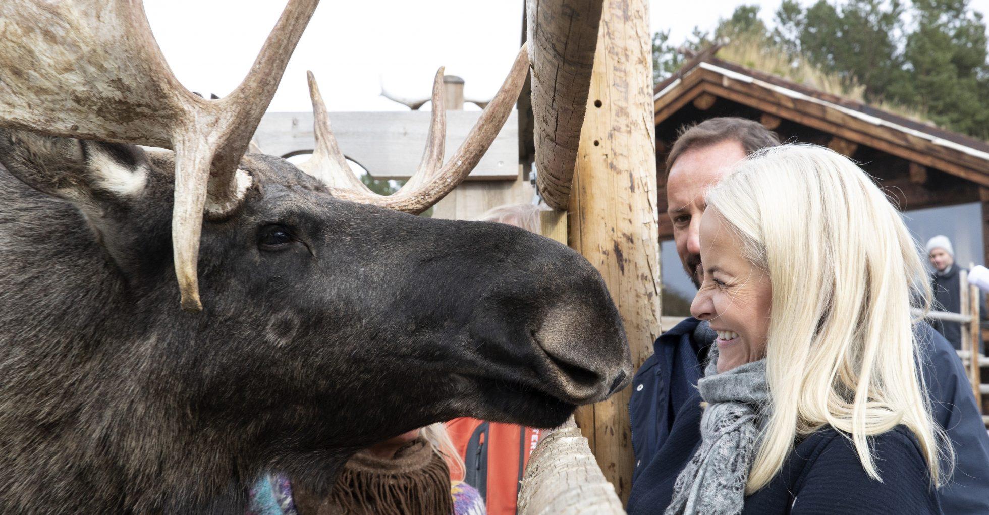 Se underbara bilderna! Mette-Marits puss med skogens konung