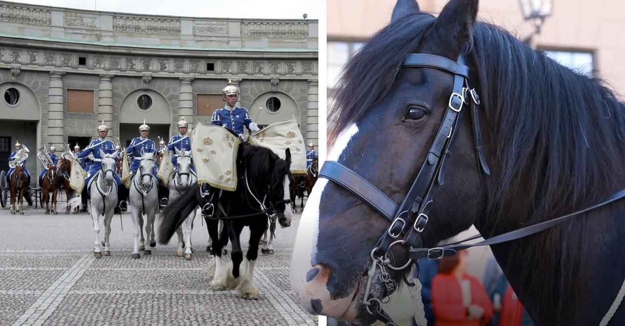 Beridna Högvakten sa farväl till sin älskade häst Oden