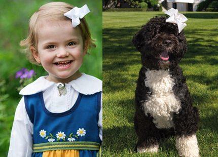 Obama har skaffat en ny hund