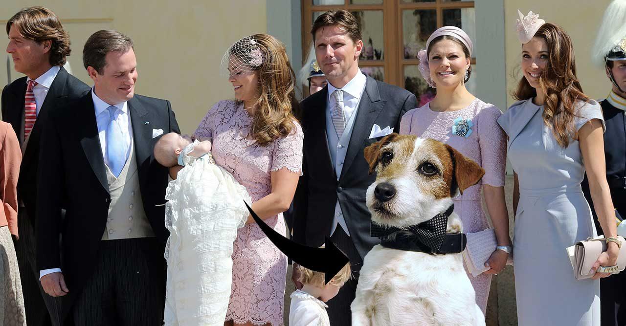 jack russel kungafamiljen ny hund