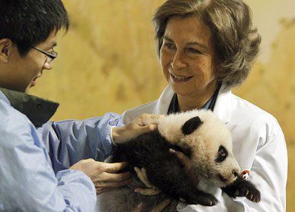Drottning Sofia av Spanien gullade med baby-panda